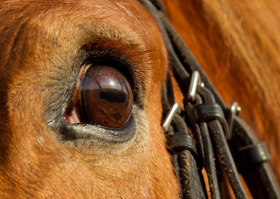 Horse Photograph - Samson by Paulina Szajek