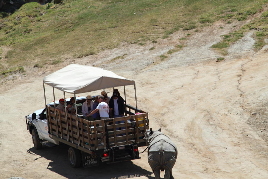 San Photograph - San Diego Zoo - 1212259 by DC Photographer