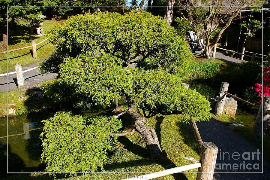 Japanese Tea Garden Photograph - San Francisco Golden Gate Park Japanese Tea Garden 3 by Robert Santuci