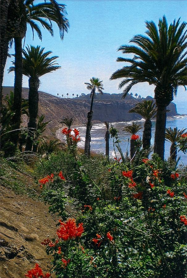 California With Palm Trees Photograph - San Pedro Coast Line by Robert Bray