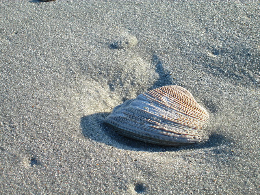 Seashell Photograph - Sand And Seashell by Nelson Watkins