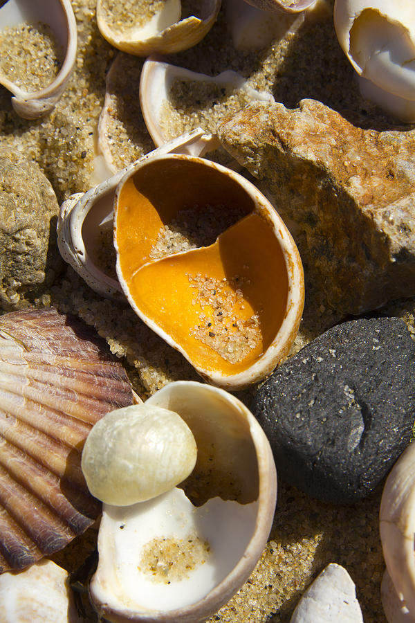 Rock Photograph - Sand Covered Shells by Eugene Bergeron