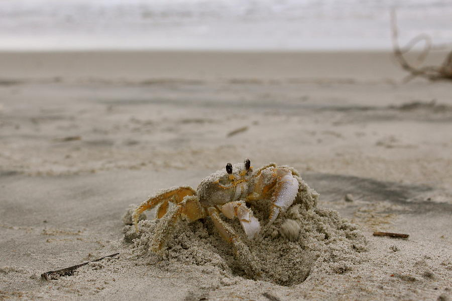 Sand Photograph - Sand Crab by Nelson Watkins