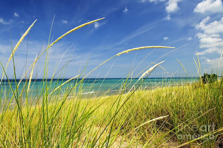 Beach Photograph - Sand Dunes At Beach by Elena Elisseeva