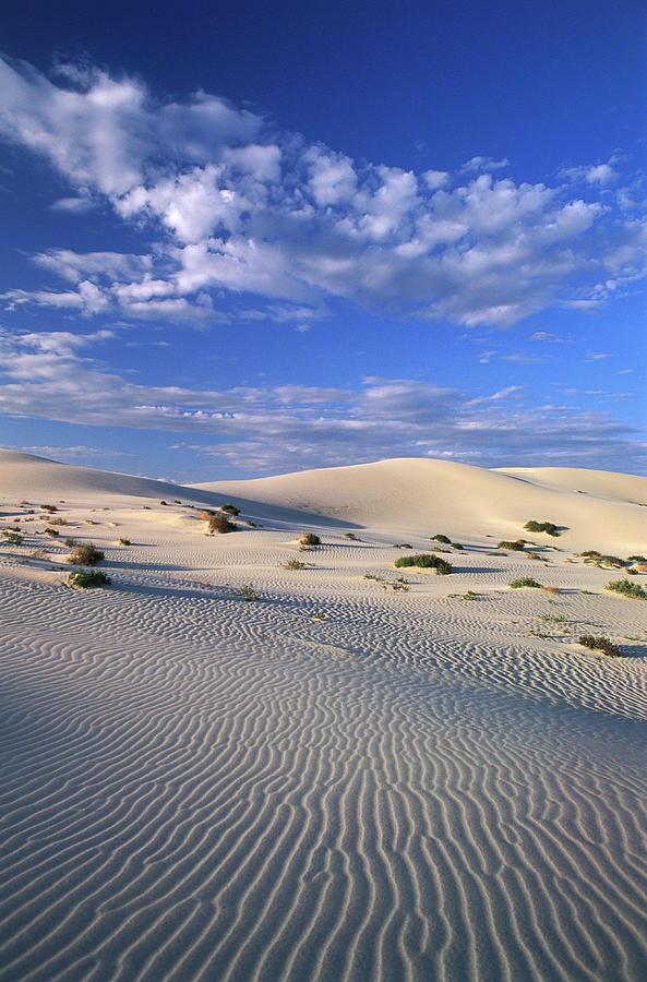Sand Dunes Carved By Wind Photograph by John W Banagan