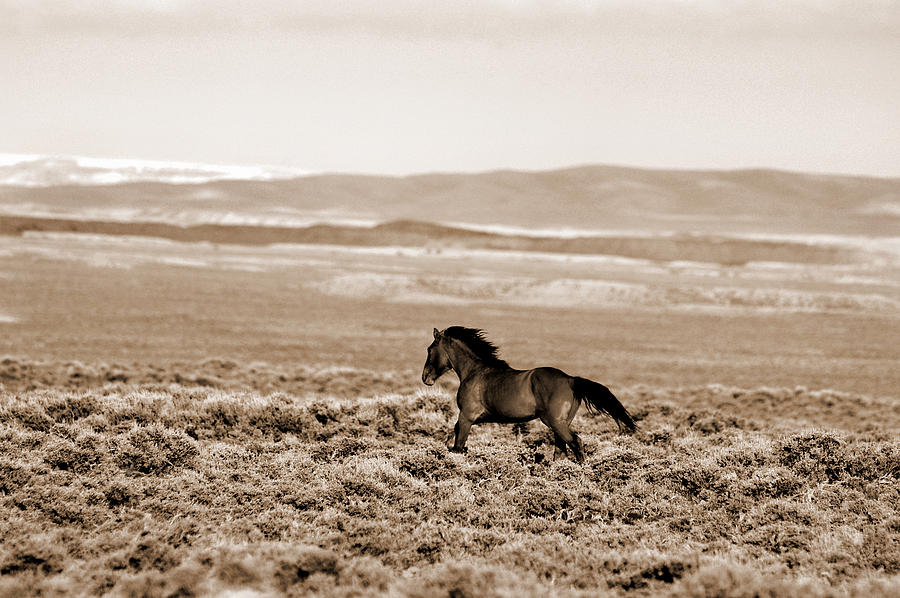 Wyoming Photograph - Sand Wash Mustang by Lourie Zipf