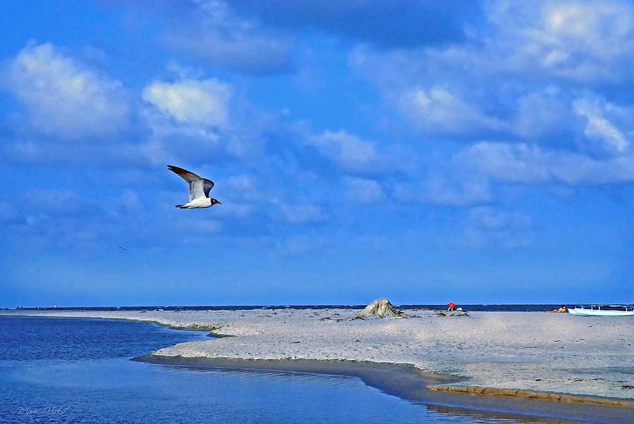 Seagull Photograph - Sandbar Bliss by Marie Hicks