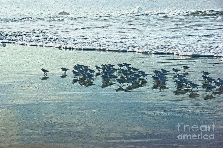 Sanderlings Digital Art - Sanderlings by Nur Roy
