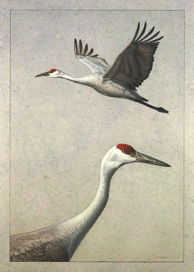 Sandhill Cranes Painting By James W Johnson