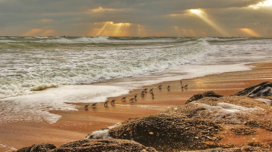 Sandpiper Sunrise Photograph by Danny Mongosa
