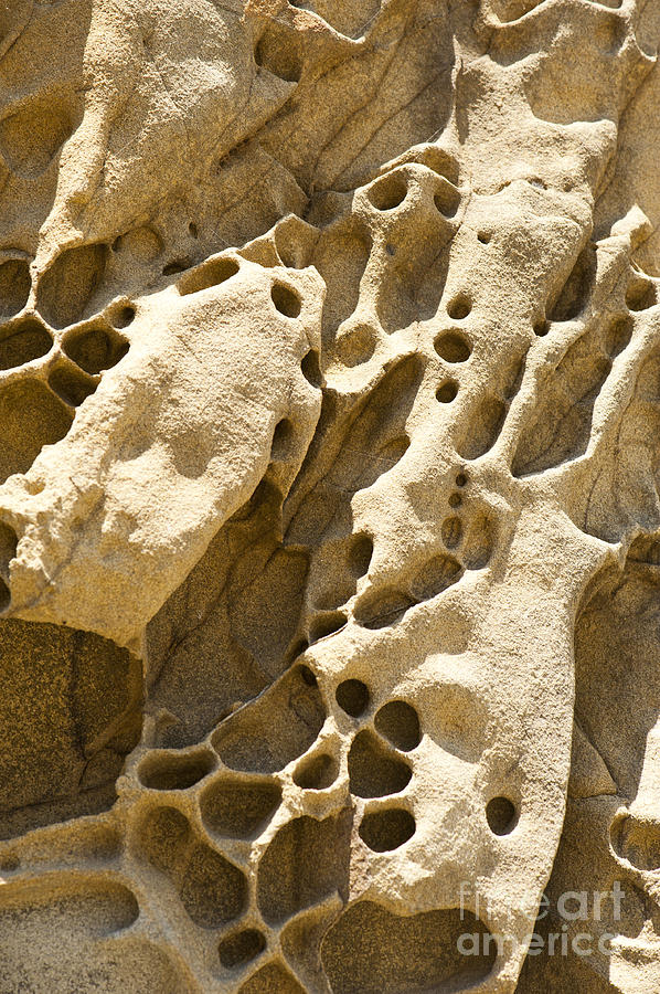 Point Lobos Photograph - Sandstone Rock Formation Two At Big Sur  by Artist and Photographer Laura Wrede