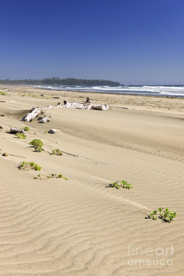 Pacific Photograph - Sandy Beach On Pacific Ocean In Canada by Elena Elisseeva
