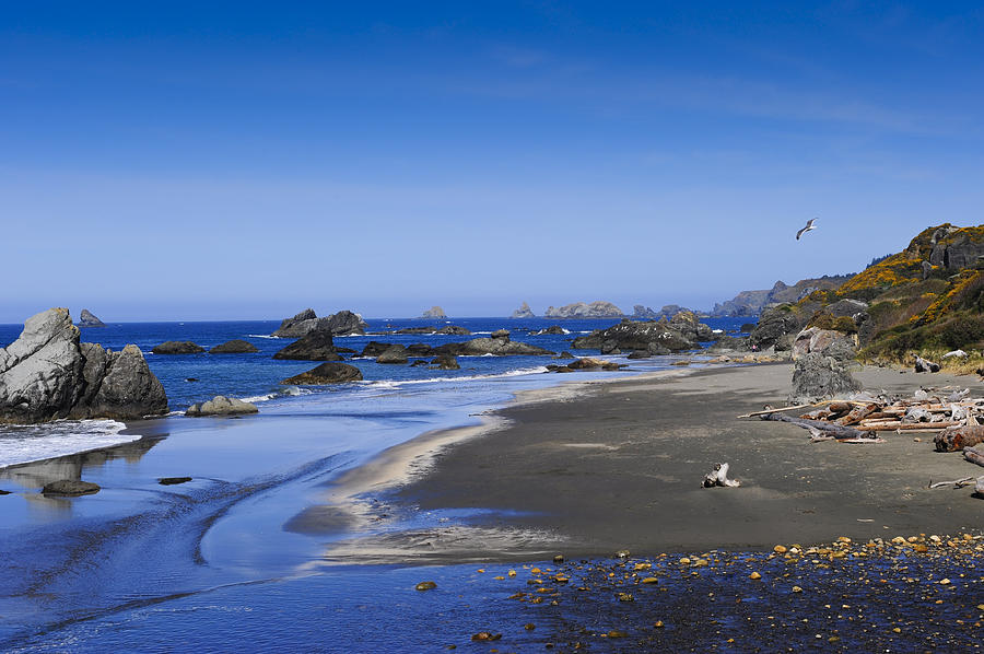 America Photograph - Sandy Beach On The North Coast by Don and Bonnie Fink
