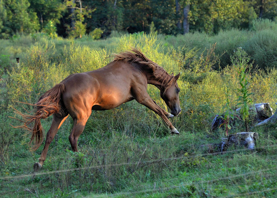 Horse Photograph - Sandy The Roan Cavorting  - C0094e by Paul Lyndon Phillips
