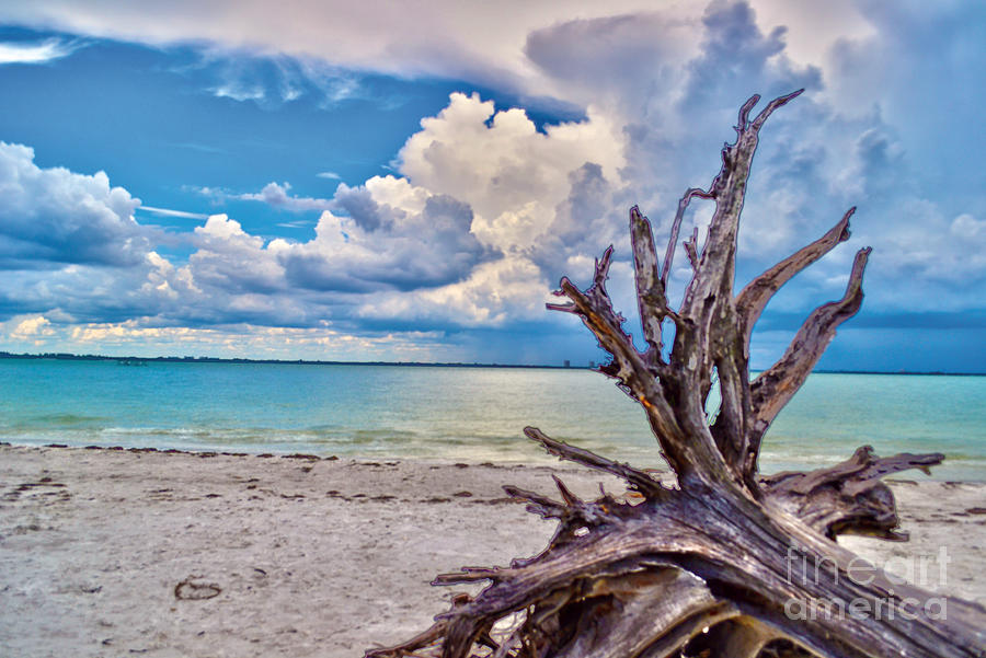 Sanibel Island Driftwood Photograph By Timothy Lowry