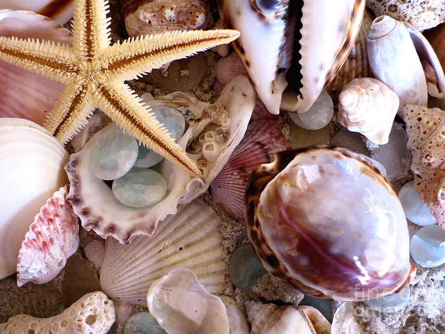 Seashells Photograph - Sanibel Shells by Colleen Kammerer