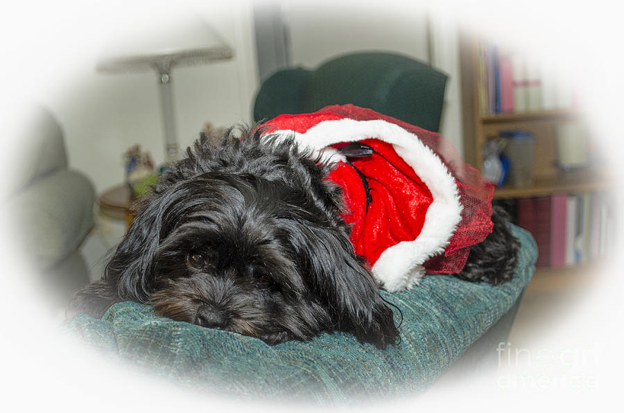 Ziva Photograph - Santa Dog by Joe McCormack Jr