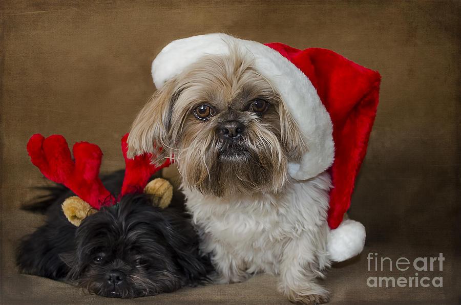 Christmas Photograph - Santa I Am Tired  by Nicole Markmann Nelson