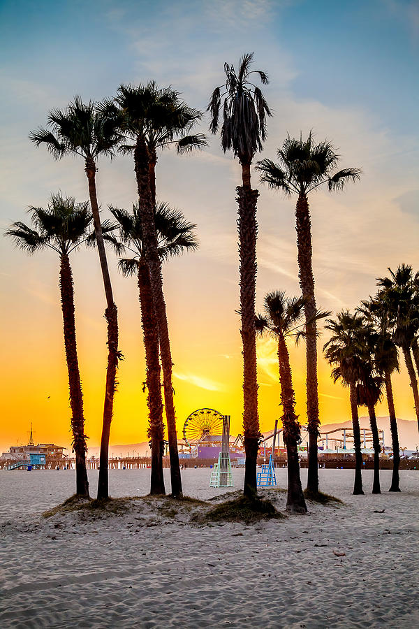 Los Angeles Photograph - Santa Monica Palms by Az Jackson