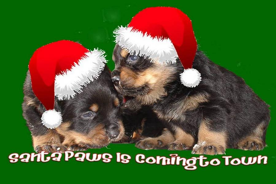 Christmas Photograph - Santa Paws Is Coming To Town Christmas Greeting by Tracey Harrington-Simpson