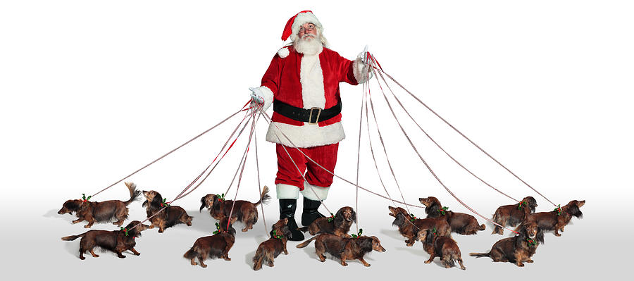 Santa With Dogs Photograph by Michel Tcherevkoff