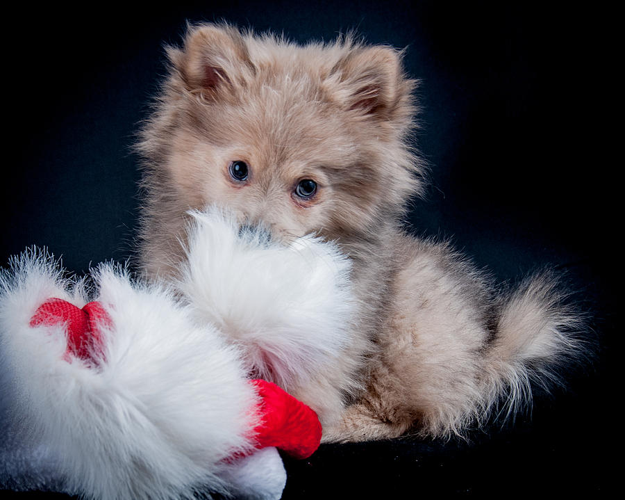 Santa's Little Helper by Constance Sanders