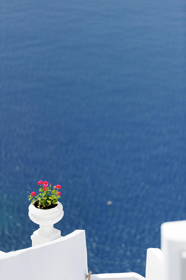 Santorini Flower Photograph by Brave-carp