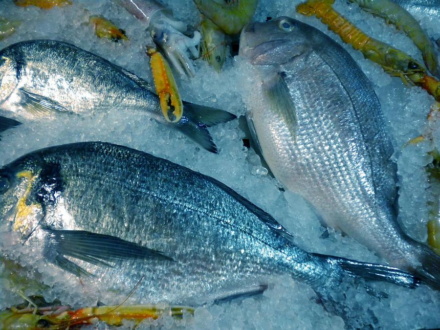 Colette Photograph - Santorini  Island Fresh  Dorados by Colette V Hera  Guggenheim