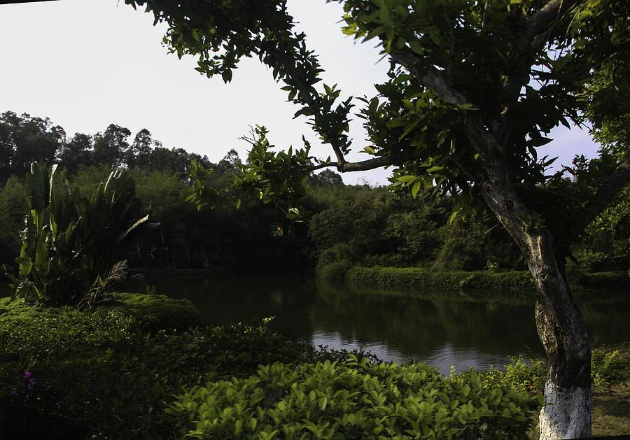 Tropical Park Photograph - Sanya Park by Qing