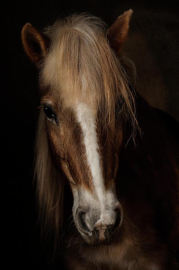 Haflinger Photograph - Sapience by Martine Benezech