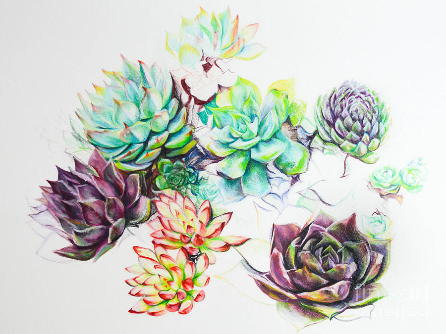 Sarah S Succulents Drawing By Cassandra Dunmyer