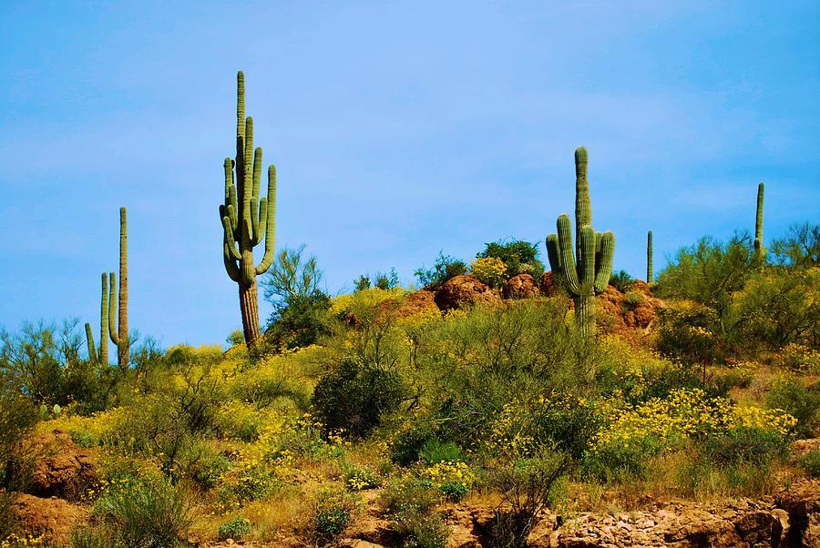 Cactus Photograph - Sargaro Cactus And Flowers by Richard Jenkins