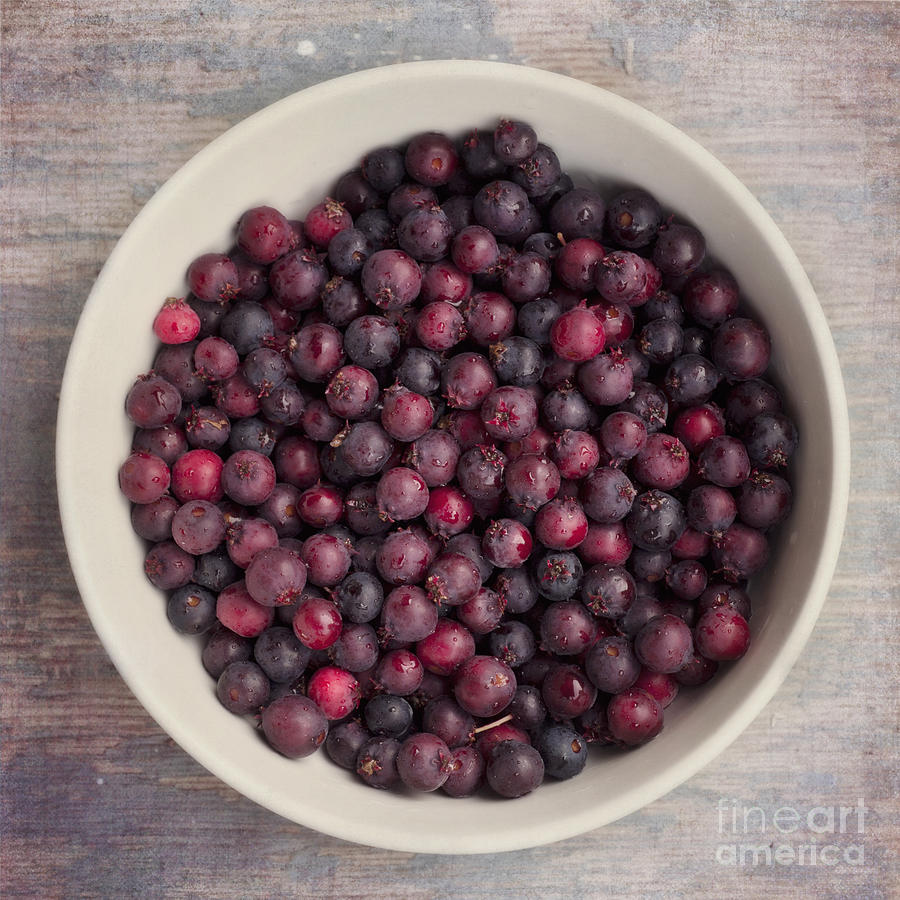 Amelanchier Alnifolia Photograph - Saskatoon Berries by Priska Wettstein