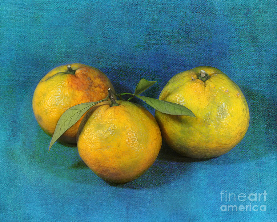 Louisiana Photograph - Satsumas by Judi Bagwell