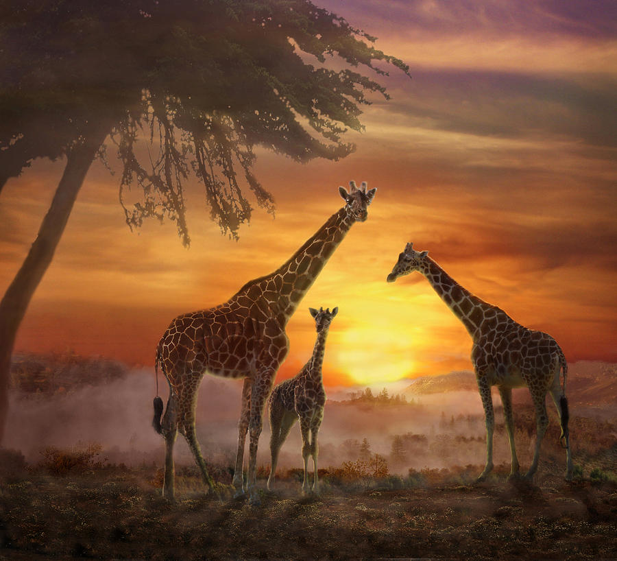Savanna Sunset Photograph By Melinda Hughes-Berland