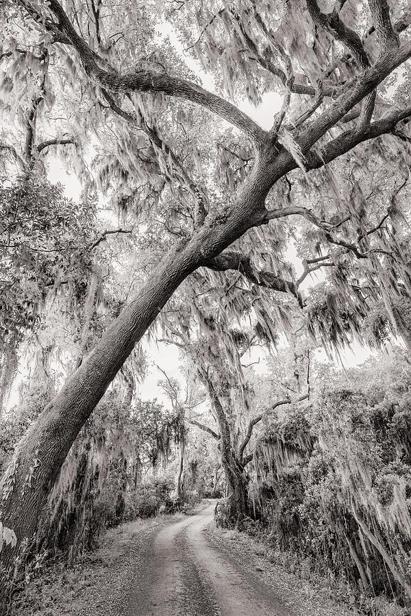 Savannah Photograph - Savannah Drive by Chilehead Photography
