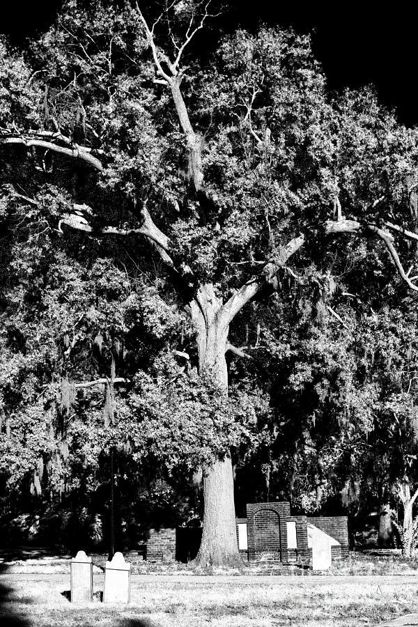 Graves Photograph - Savannah Graves by John Rizzuto