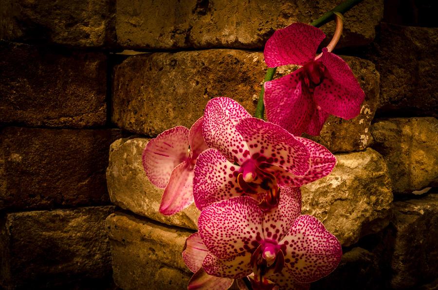 Orchid Photograph - Savannah Grey Orchid by Richard Kook