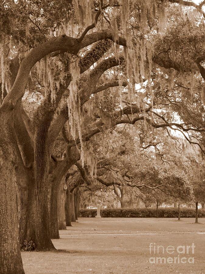 Savannah Photograph - Savannah Sepia - Emmet Park by Carol Groenen