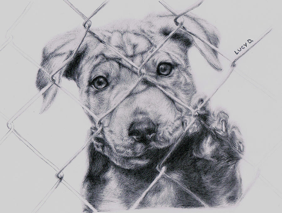 Animals Drawing - Save Me by Lucy D