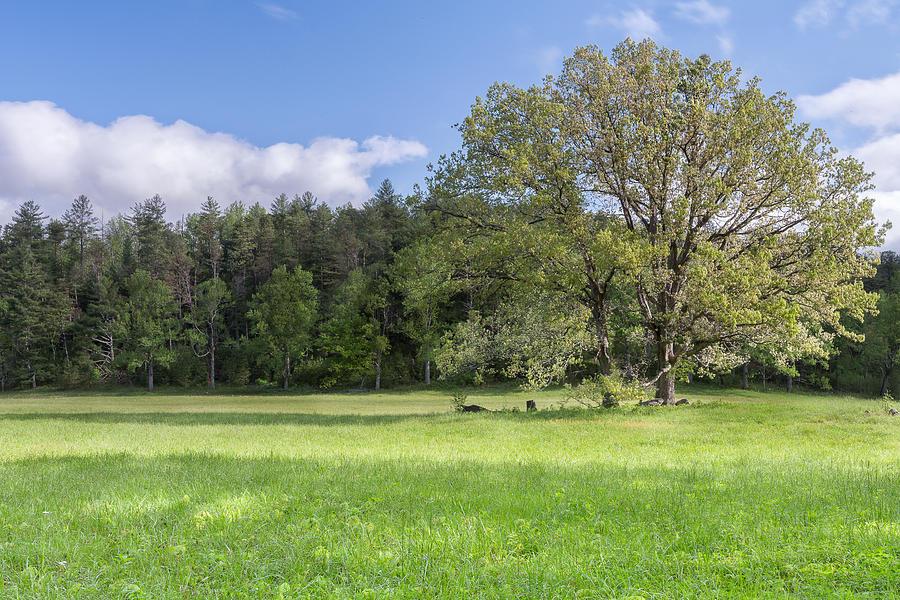 Green Photograph - Save My Tree by Jon Glaser