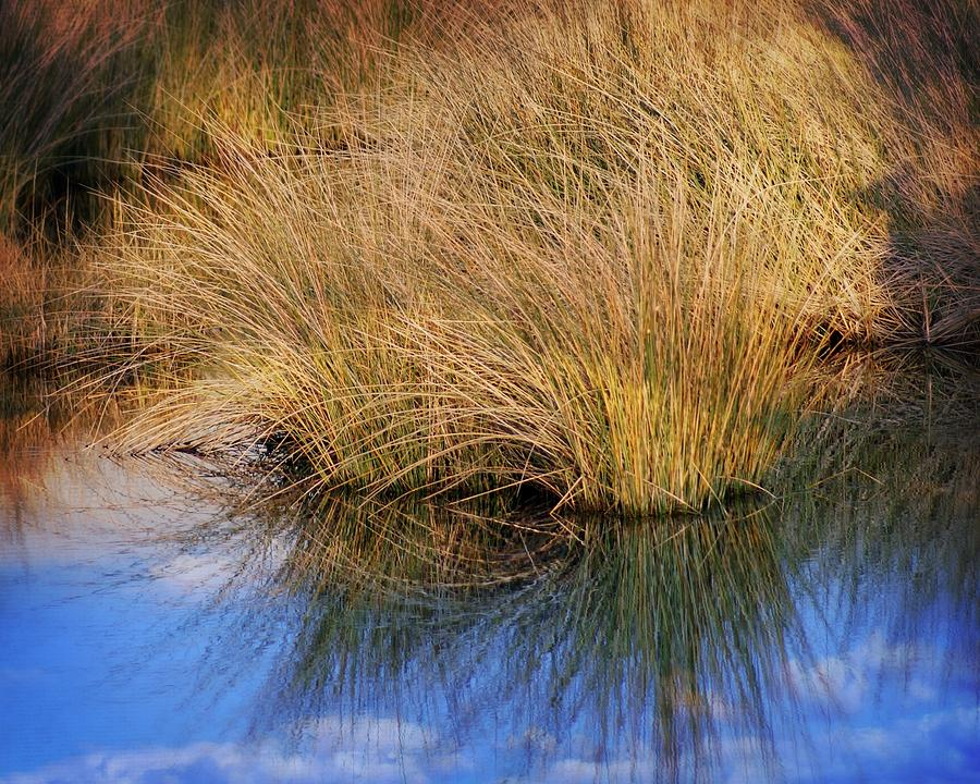 Grass Photograph - Sawgrass by Marty Koch