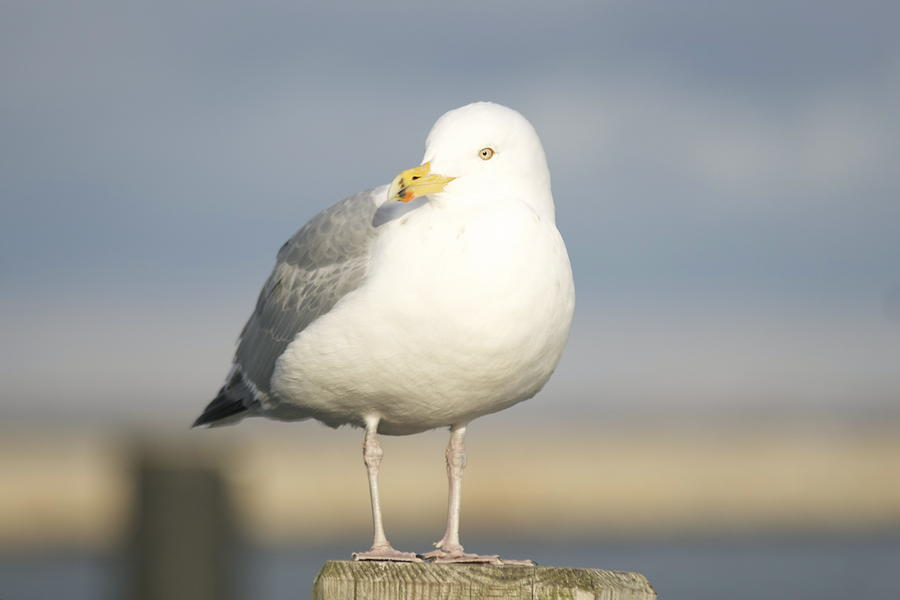 Seagulls Photograph - Say What  by Eugene Bergeron