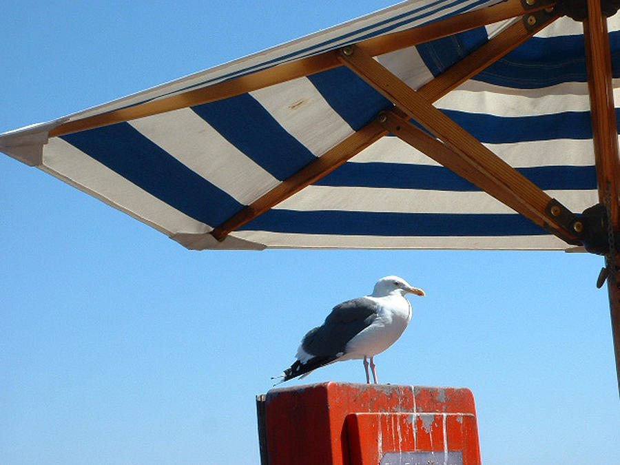 SB sseagull seeks shelter by Joan  Jones