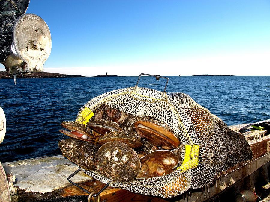 Scallops Bounty Of The Sea Photograph
