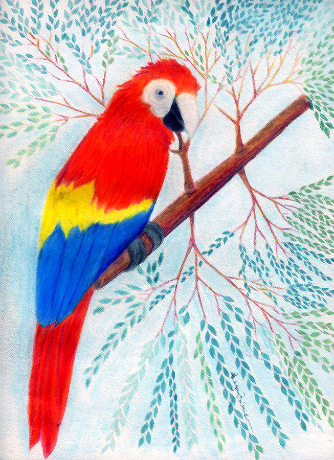 Birds Drawing - Scarlet Macaw by Greg Roberson