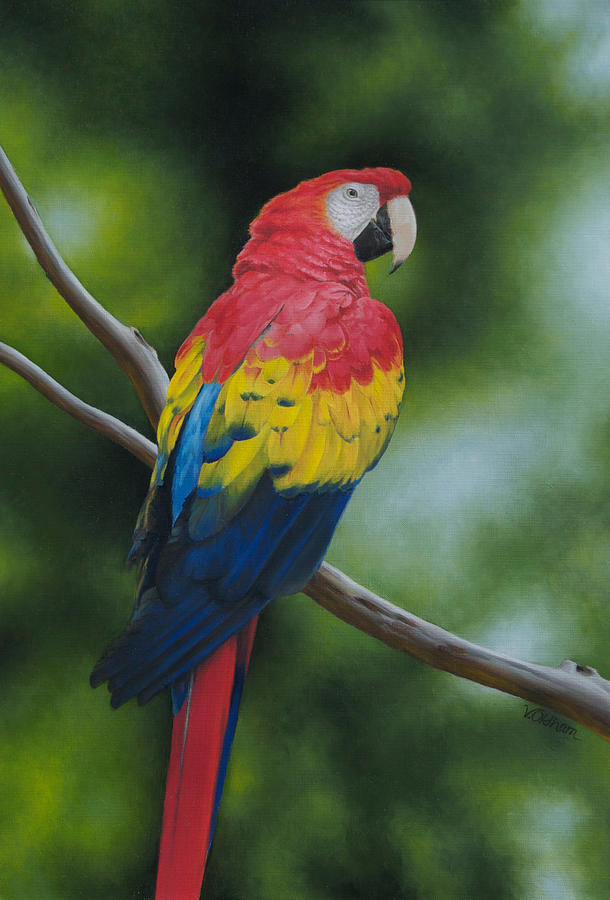 Birds Painting - Scarlet Macaw by Victoria Oldham
