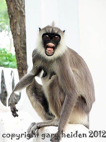 Scary Monkey Photograph By Gary Heiden