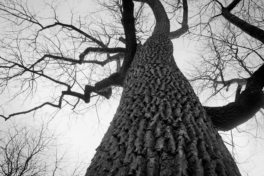 Tree Photograph - Scary Tree by Richie Stewart