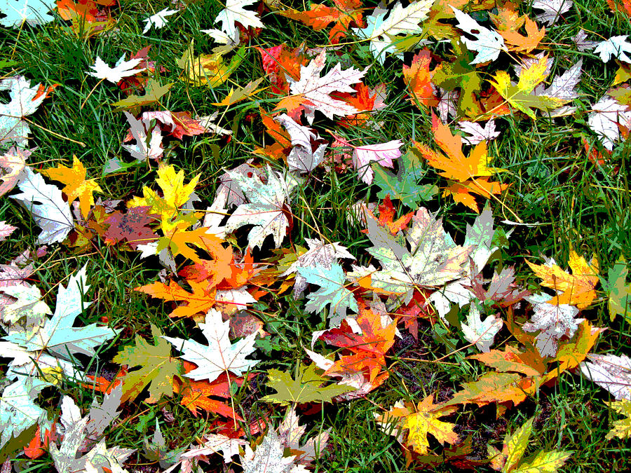 Autumn Photograph - Scattered Leaves by Mariola Szeliga